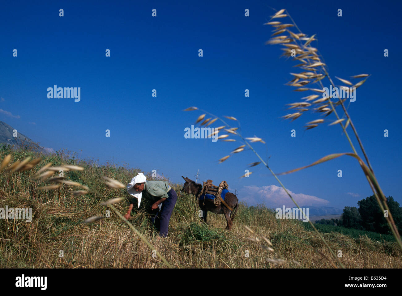Woman working the fields, Albania, 1994 - Stock Image