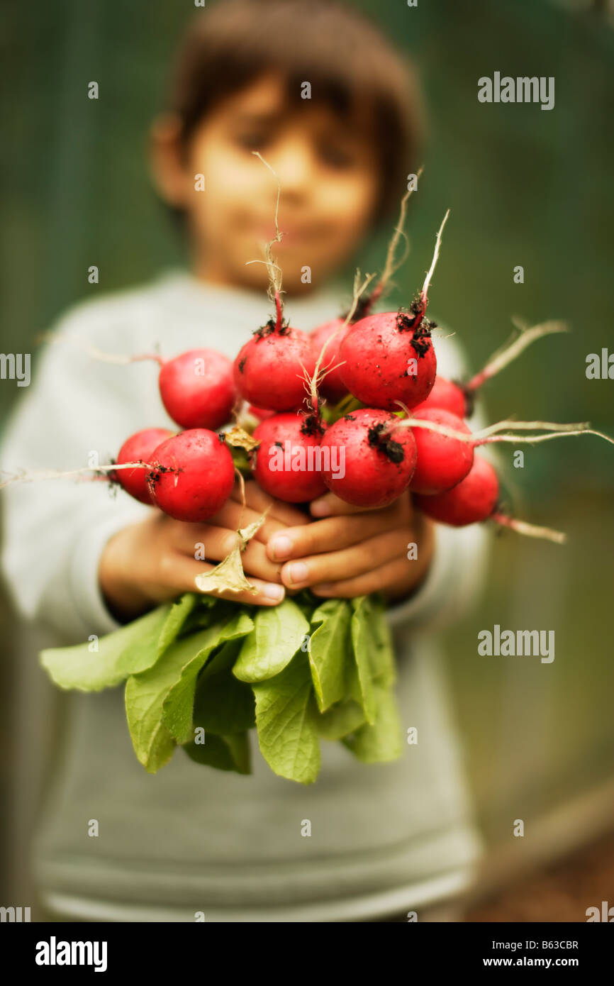 Six year old boy collects radishes grown organically in a square foot garden - Stock Image
