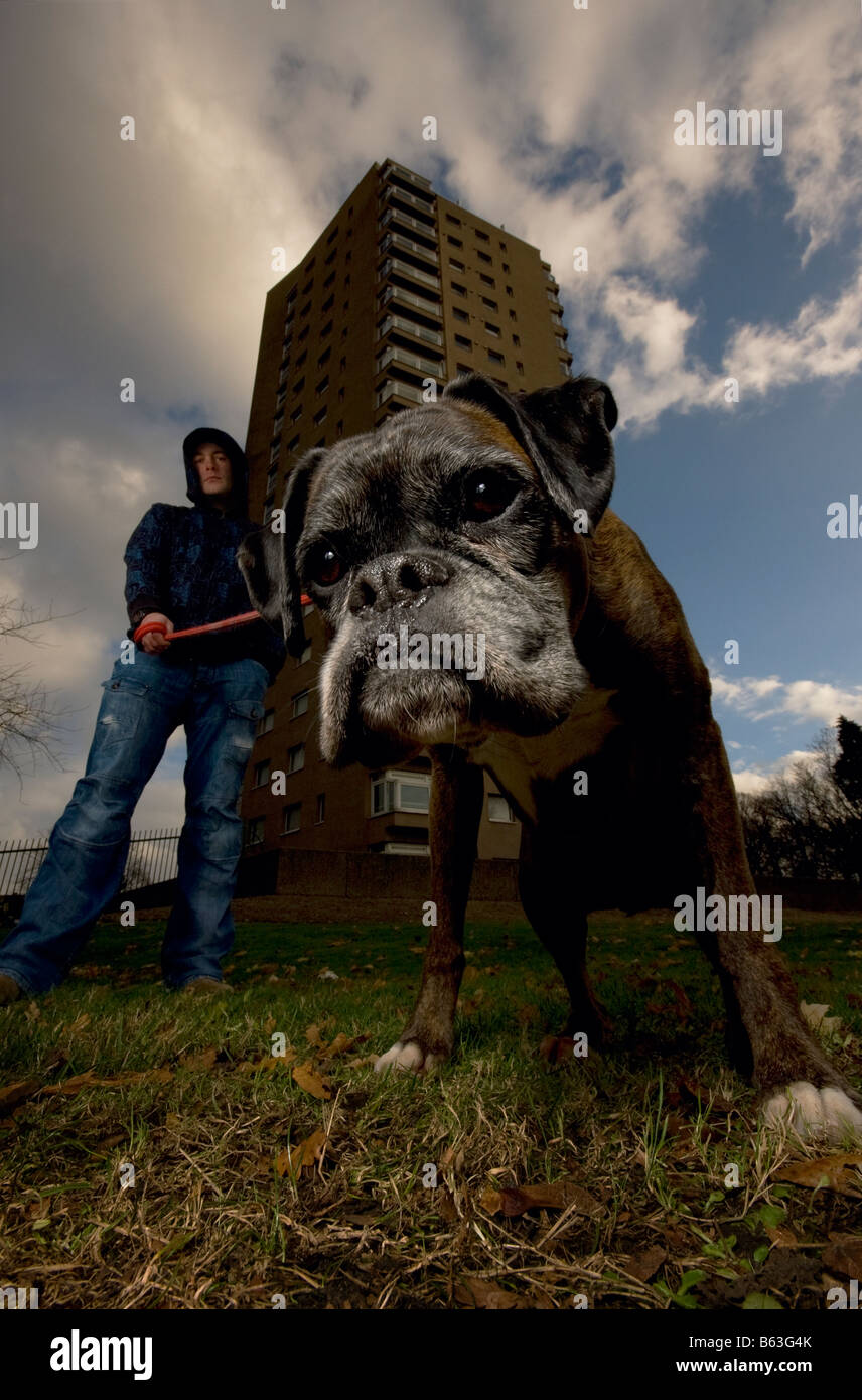 A hooded youth holds his Boxer dog on a lead outside a housing estate in Brixton London - Stock Image