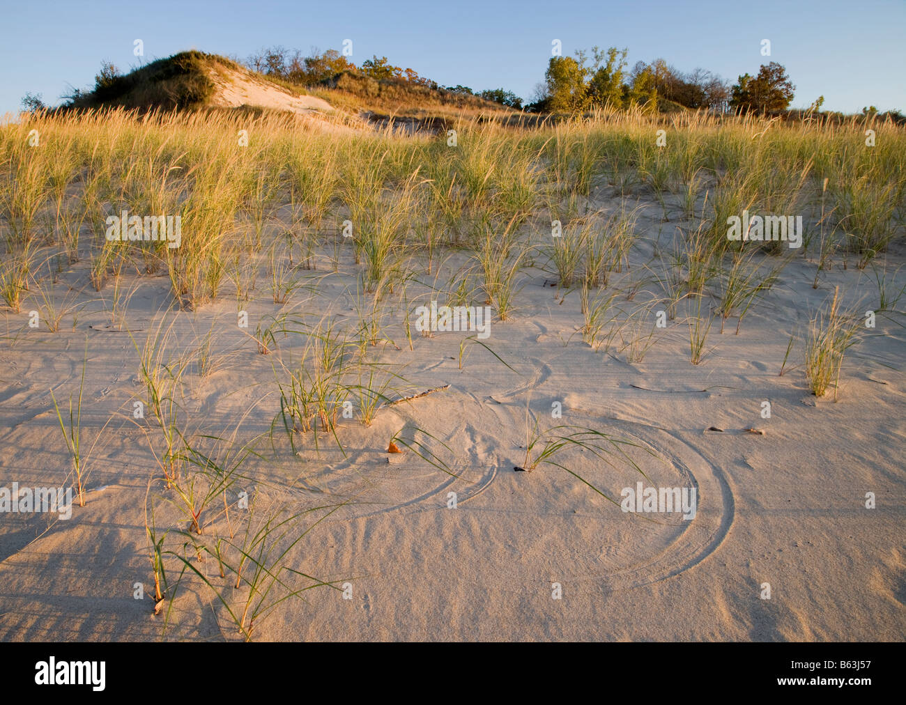 pattern in sand from wind blown grasses, Indiana Dunes State Park, Indiana - Stock Image