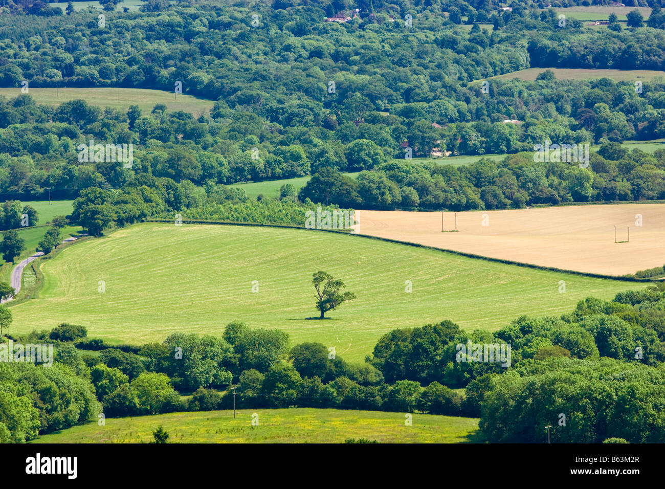 Lone tree in the Surrey Weald looking towards the South Downs Surrey England UK - Stock Image
