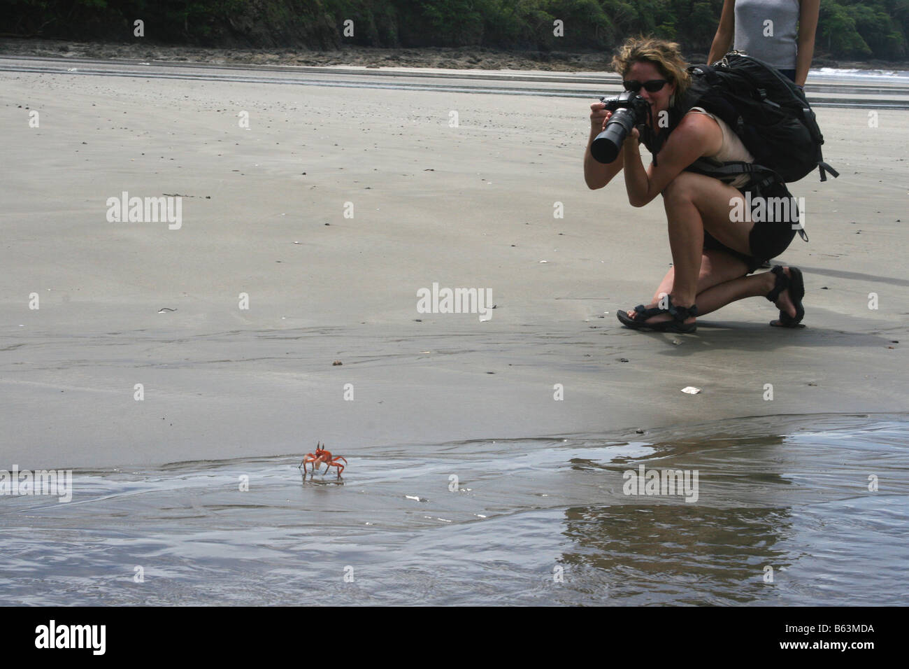 Tourist on a beach in Costa Rica takes a picture of a crab. - Stock Image
