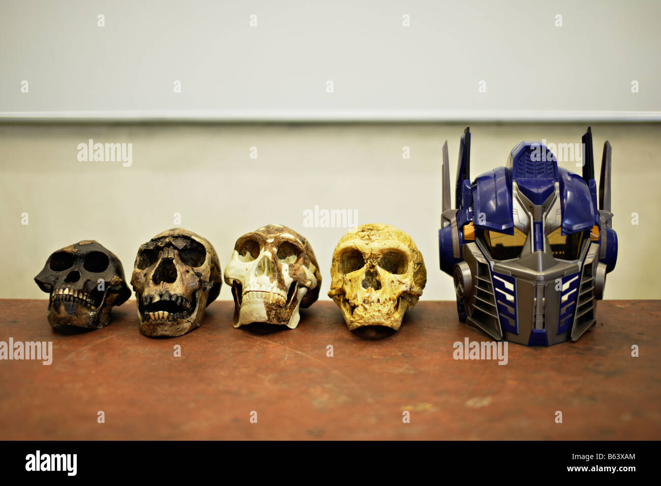 Early hominid skulls and Optimus Prime transformer robot toy mask from the Speilberg movie - Stock Image