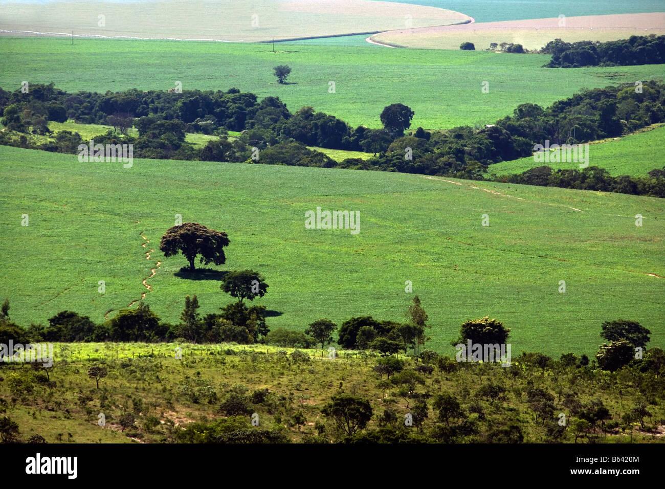 Brazil, Itaberai, Goias, Soy plantations Stock Photo