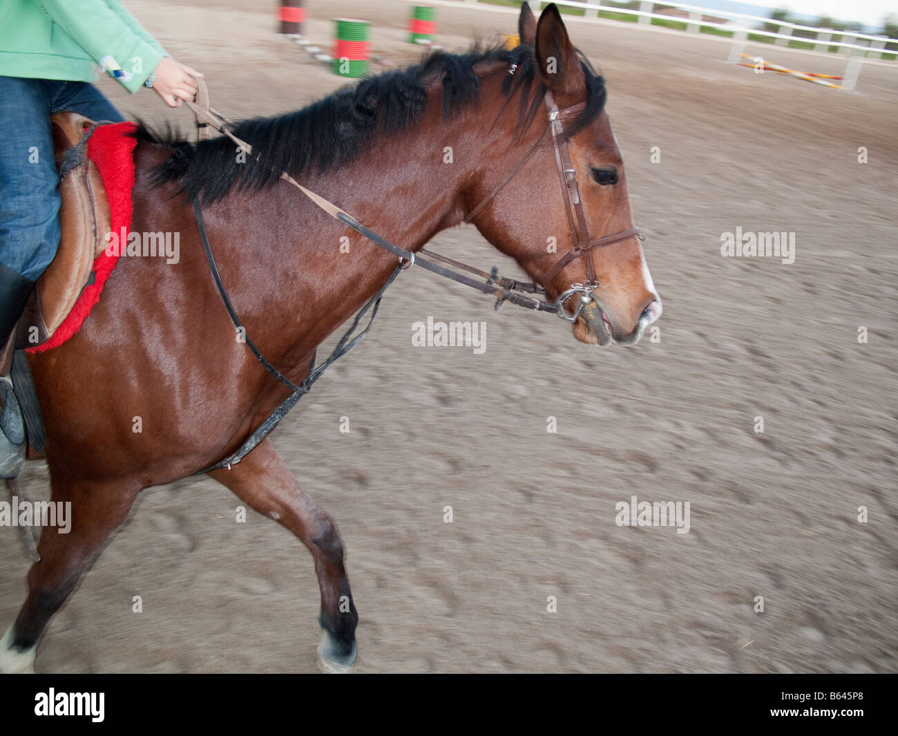Close up of person horse riding - Stock Image