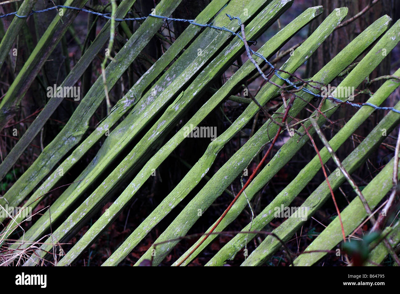 A wooden fence gone green and falling over - Stock Image
