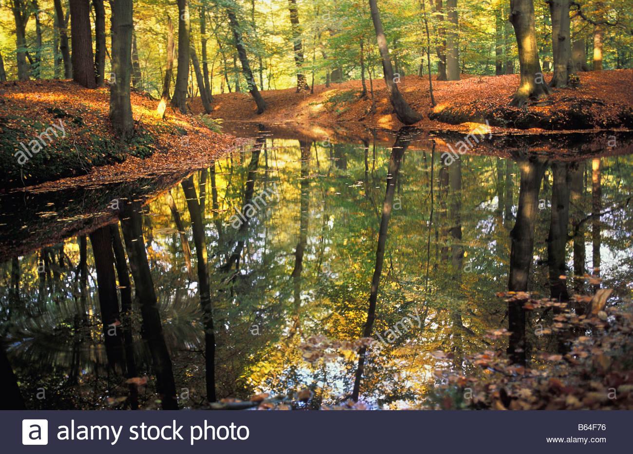 Holland, The Netherlands, Graveland. Rural estate: Hilverbeek. Autumn colours. - Stock Image