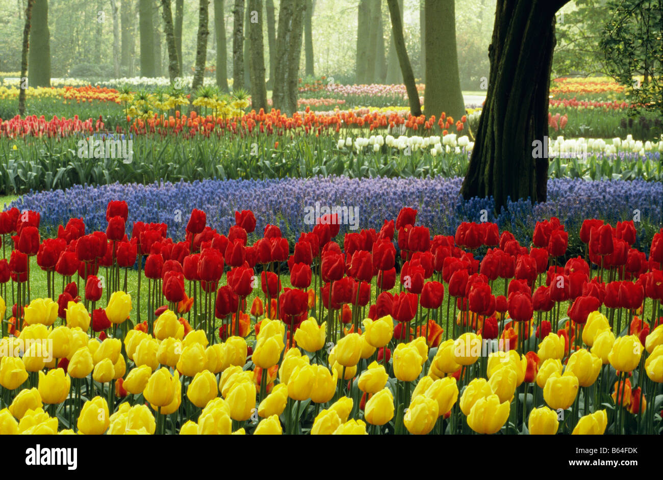 The Netherlands, Lisse. Flower gardens called De Keukenhof. Tulips. - Stock Image