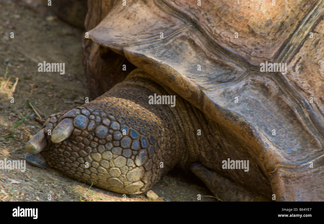 Turtle at the National Zoo in Washington DC - Stock Image