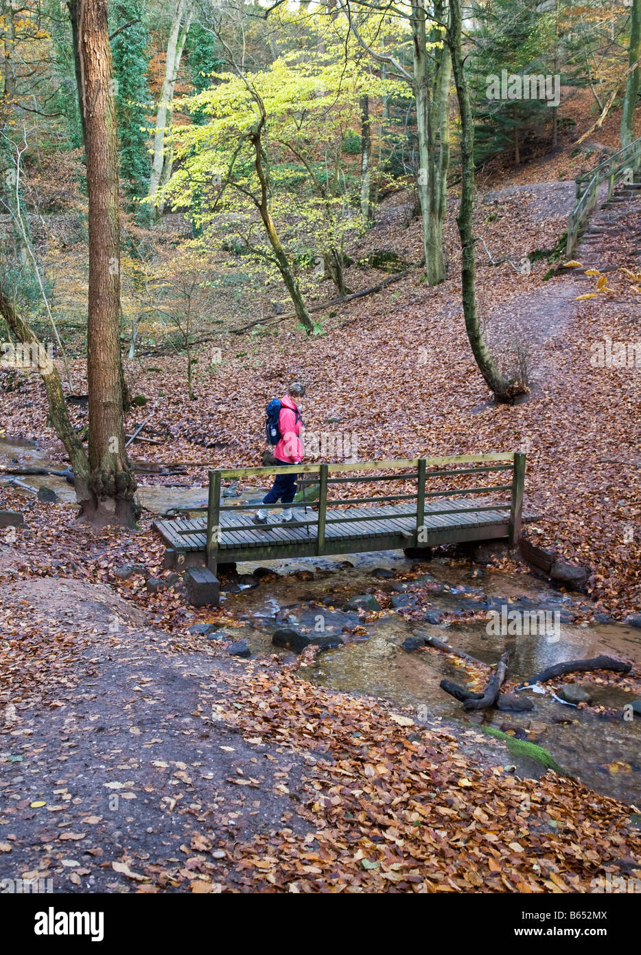 Wooden Footbridge over River Churnet in Dimmings Dale Autumn - Stock Image