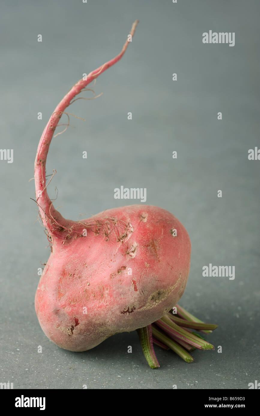 Raw beet, close-up - Stock Image