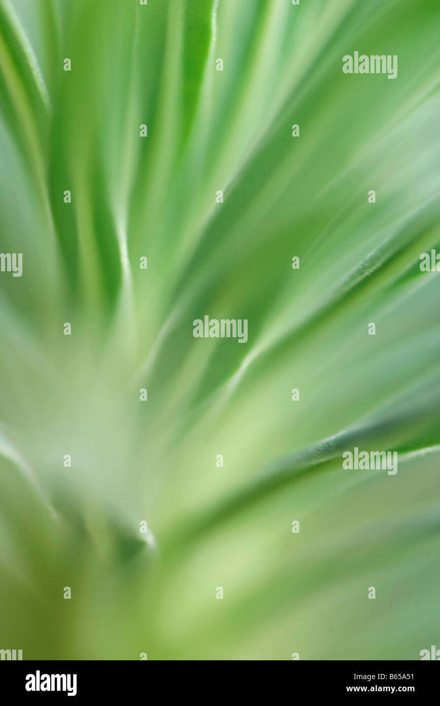 Close-up of variegated foliage in soft focus - Stock Image