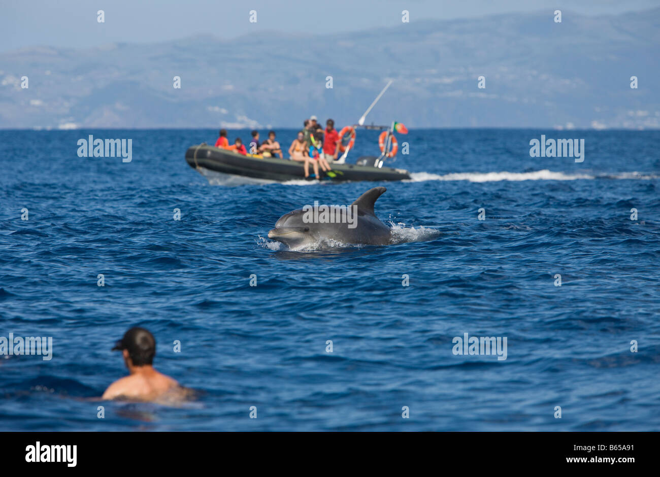 Tourists at Dolphin watching Tour Tursiops truncatus Azores Atlantic Ocean Portugal - Stock Image