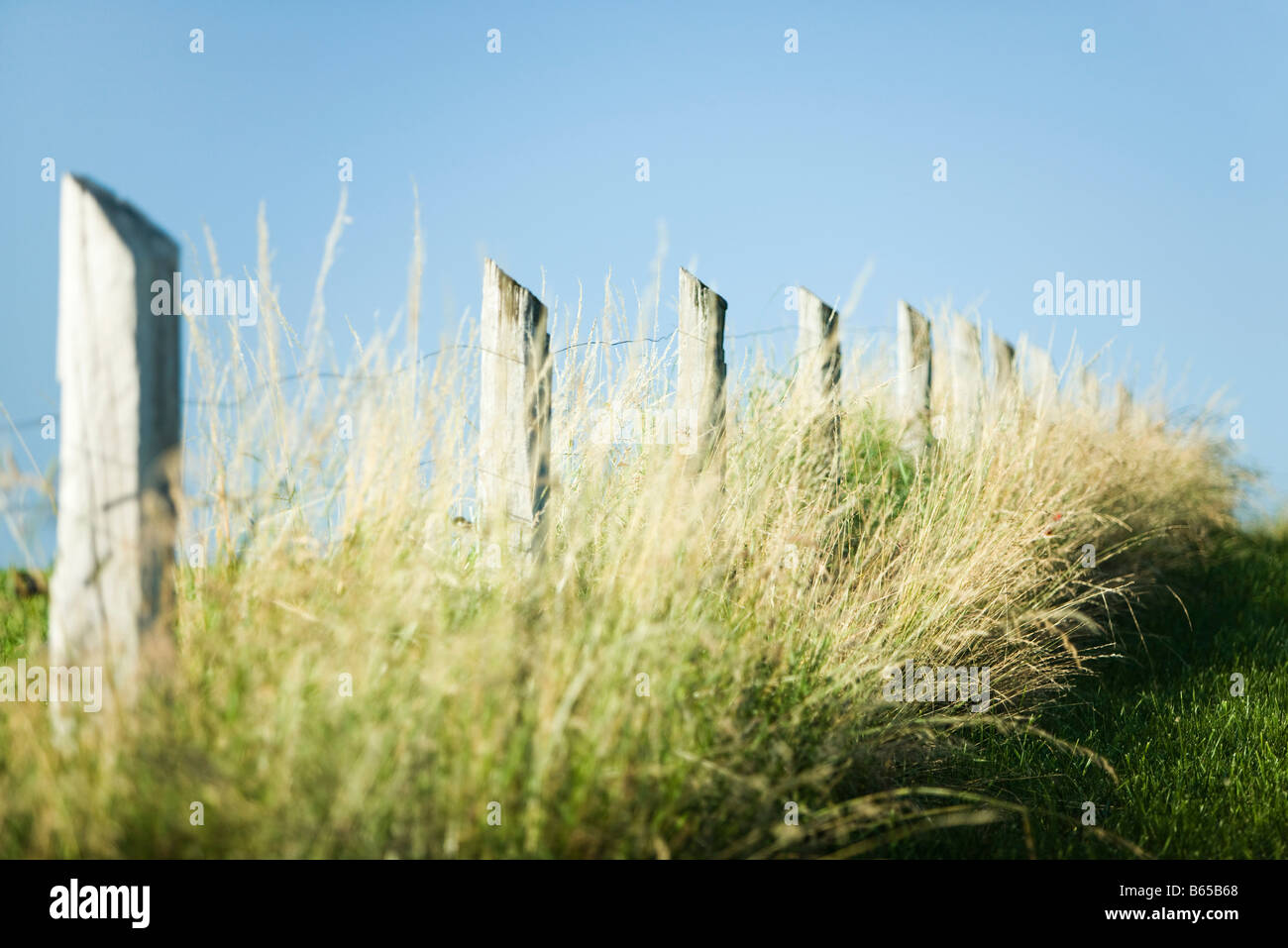 Fence in tall grass - Stock Image