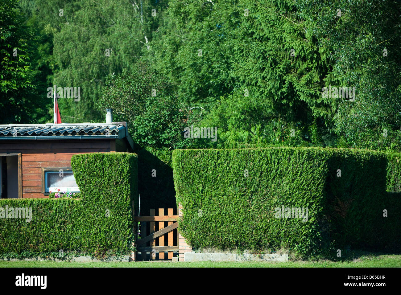 House behind hedge - Stock Image