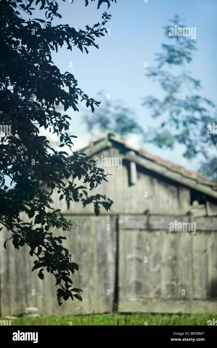 Old wooden barn, tree branches in foreground - Stock Image