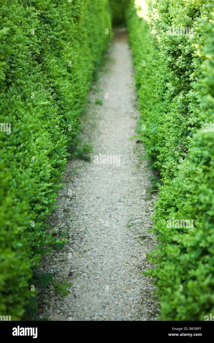 Gravel path between hedges - Stock Image