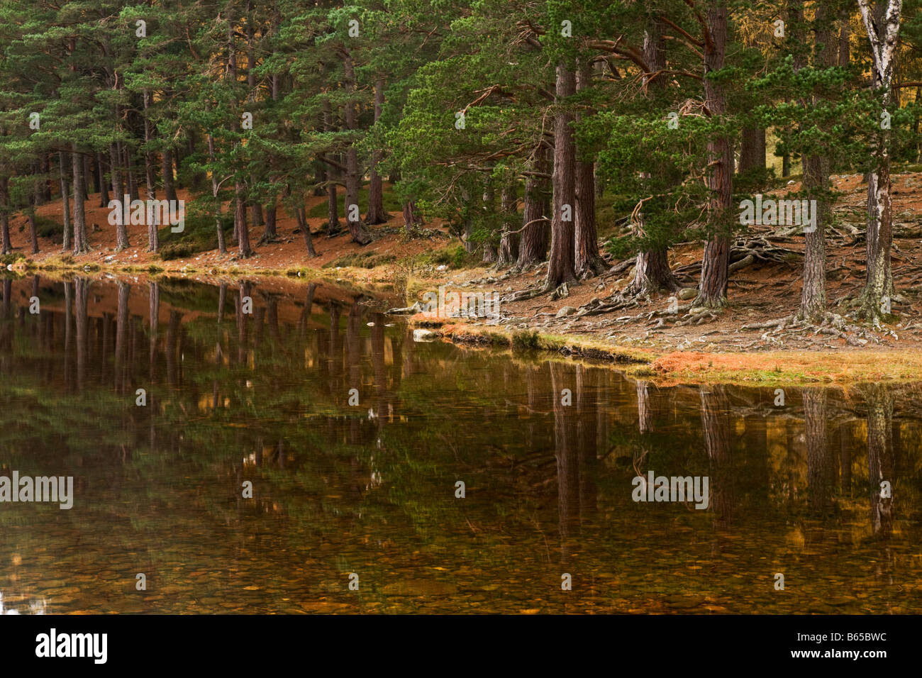Reflections at Loch an Eilein - Stock Image