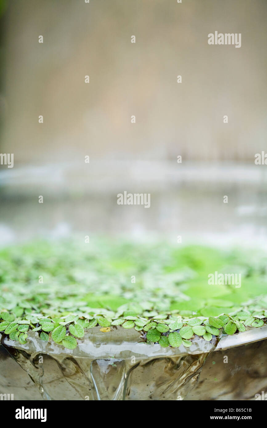 Water and leaves overflowing  basin - Stock Image