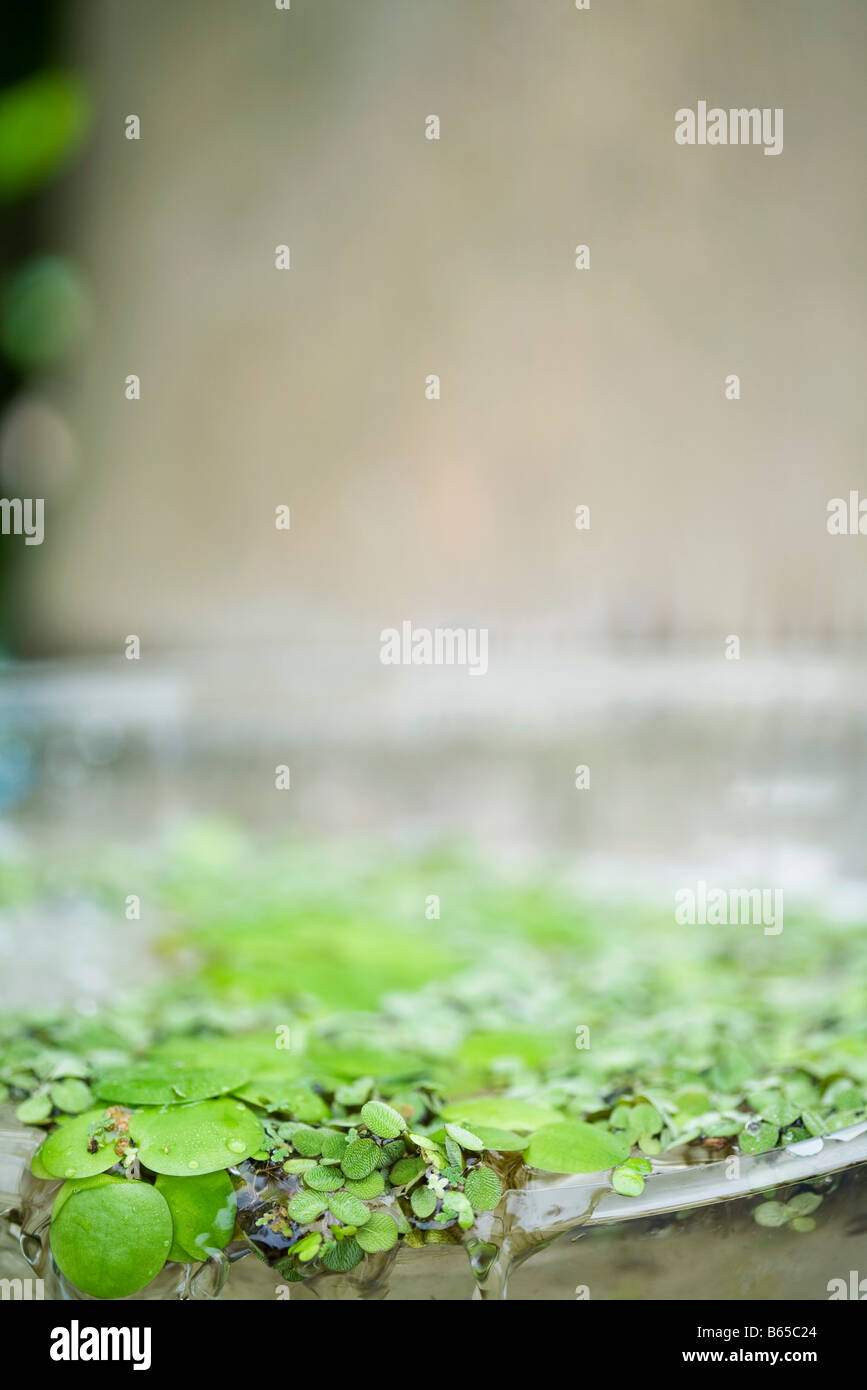 Leaves and water flowing over edge of basin - Stock Image