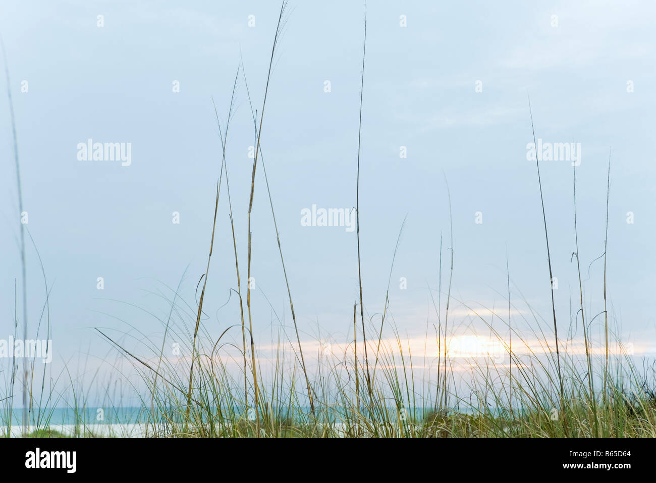 Beach sunset, tall dune grass in foreground - Stock Image