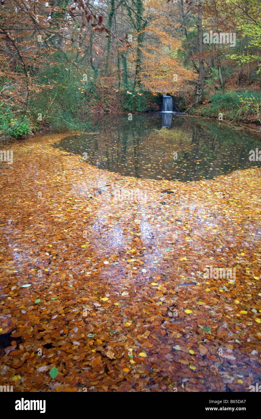 Small waterfall River Churnet Dimmings Dale in autumn - Stock Image