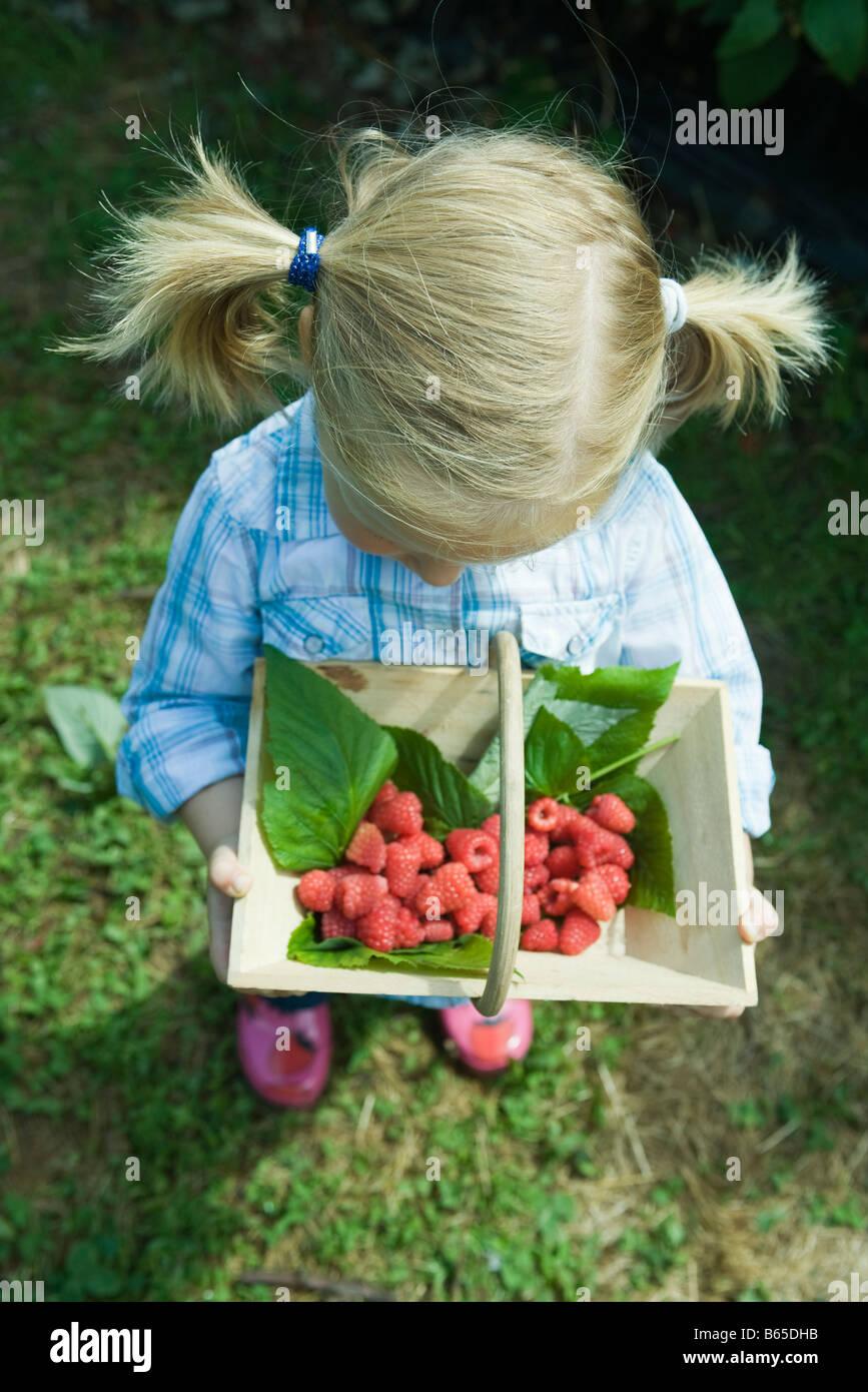 Little girl holding basket of raspberries, high angle view - Stock Image