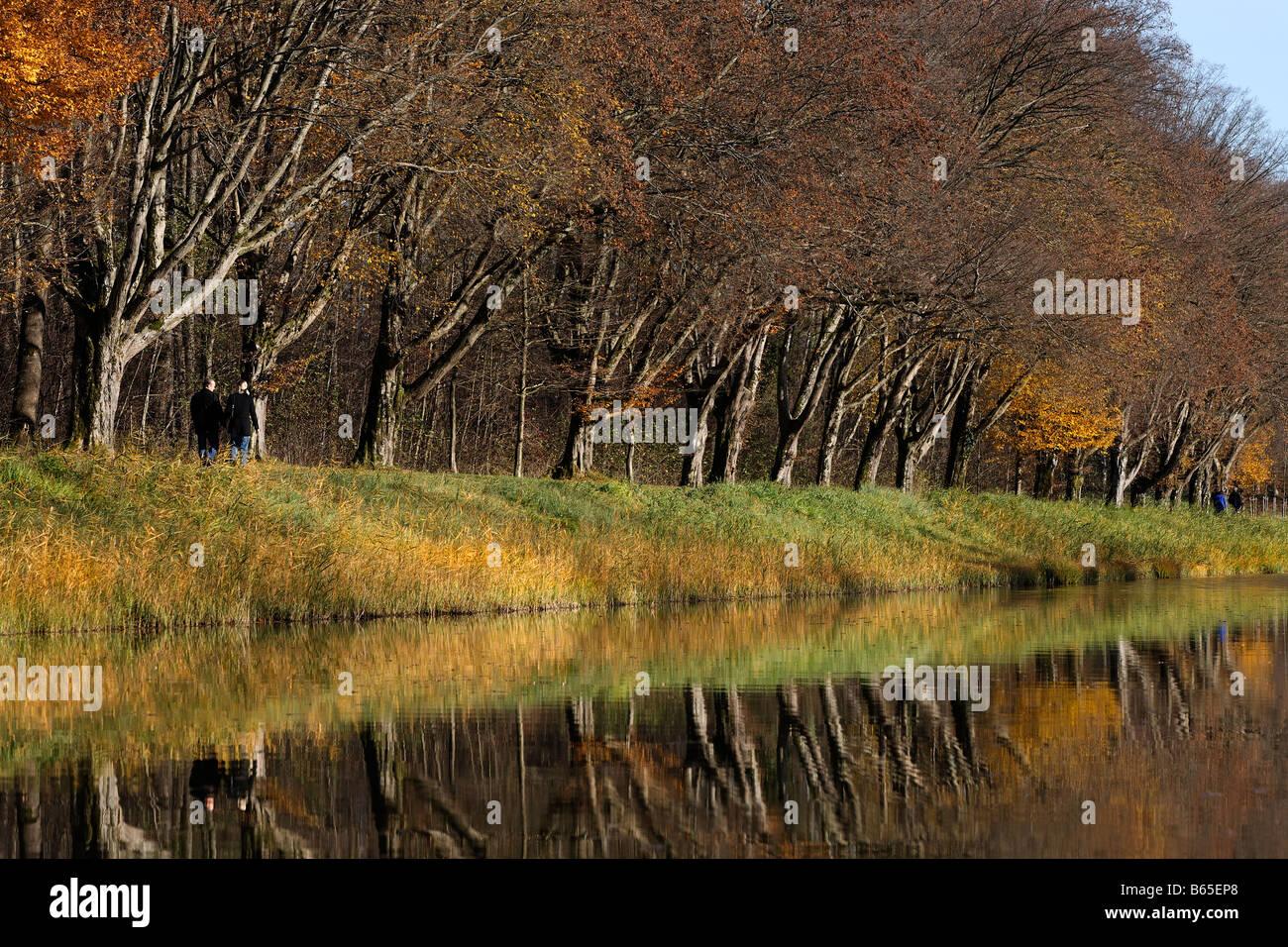 Hornbeam trees (Carpinus betulus) reflecting in water, Herreninsel island, lake Chiemsee, Chiemgau, Upper Bavaria, Stock Photo