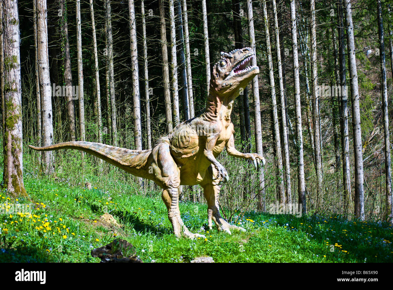 Life-sized model of a velociraptor,  at Dino Zoo, Charbonnières les Sapins, France. Charles W. Lupica - Stock Image