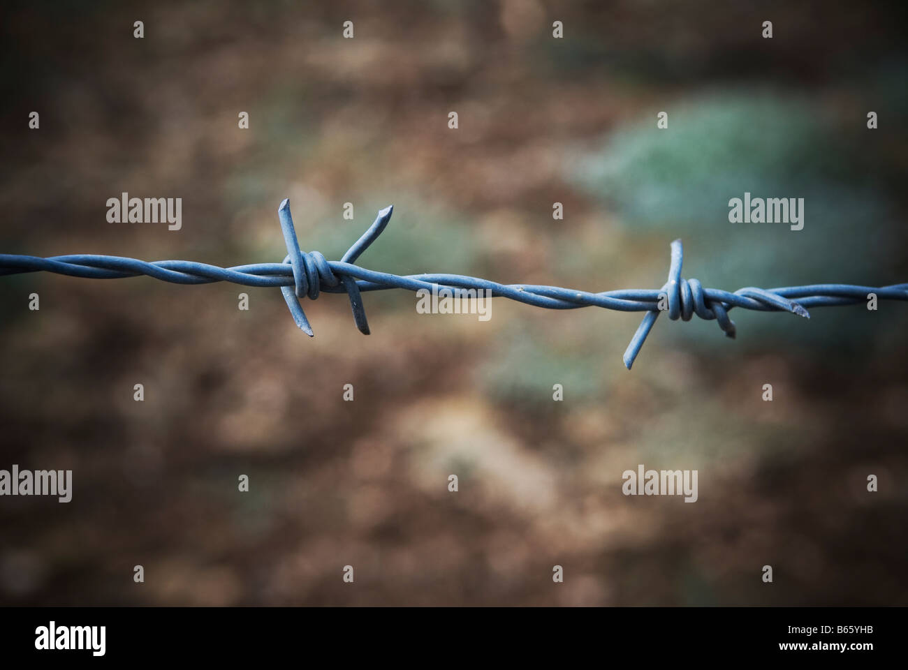 Barbed wire Lebanon Middle East - Stock Image