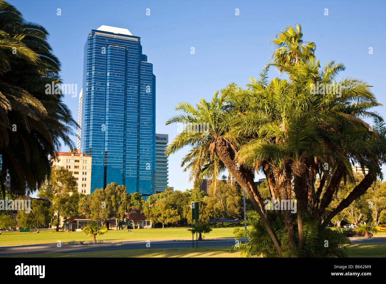 Trees Perth Western Australia with tall buildings in the background - Stock Image