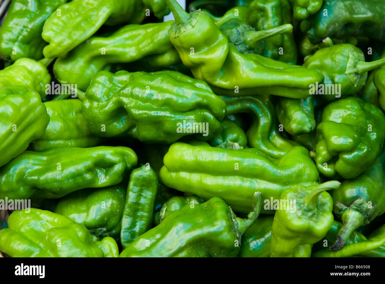 Organic Green peppers In outdoors market Lebanon Middle East - Stock Image