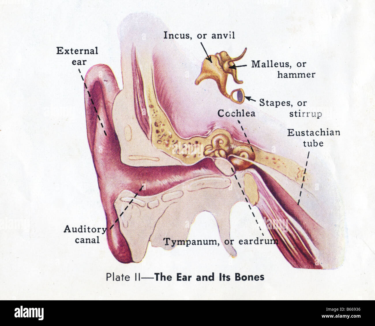 Ear diagram stock photos ear diagram stock images alamy old medical diagram parts of the ear stock image ccuart Images