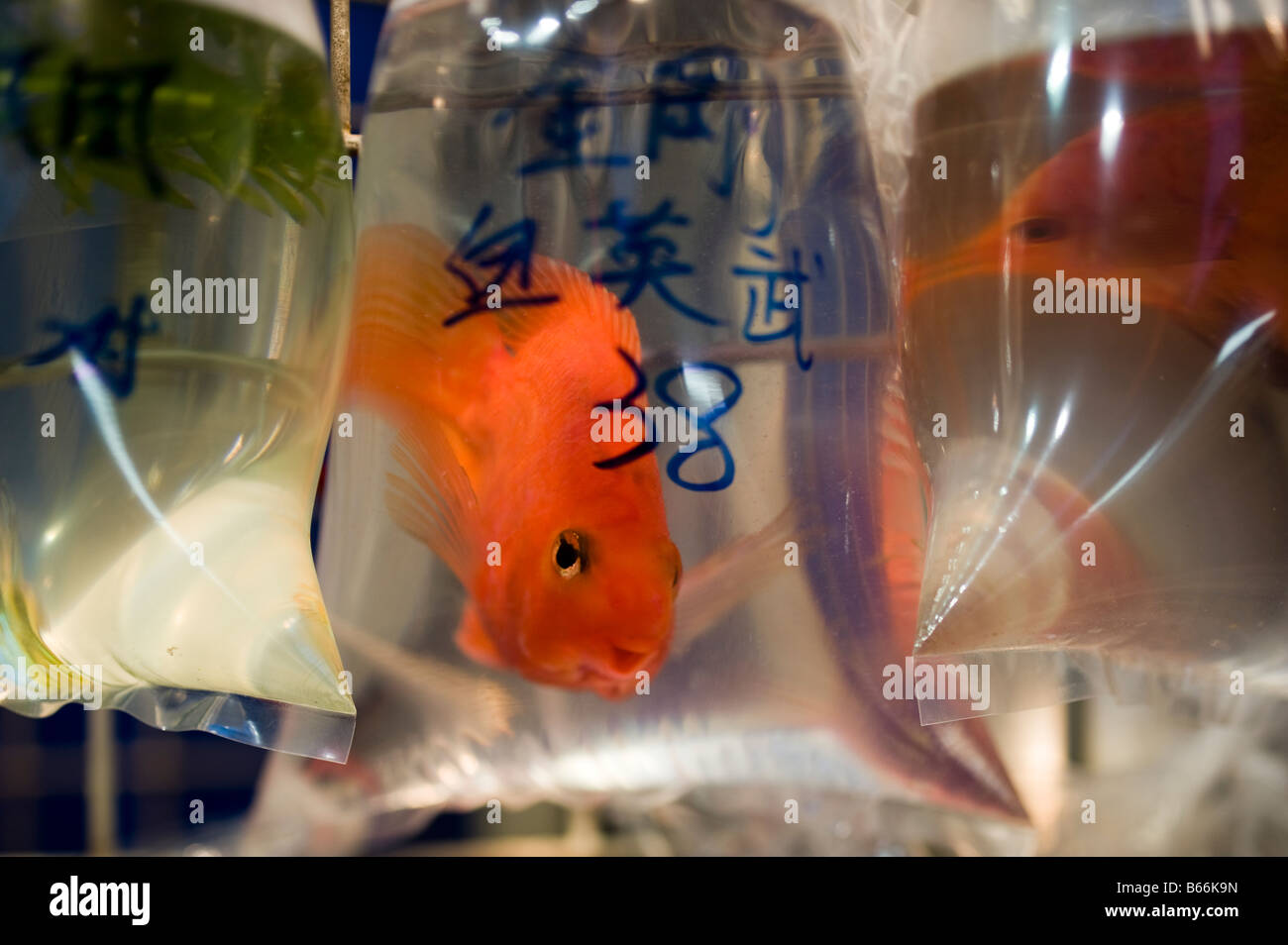 Live Fish Trade Hong Stock Photos & Live Fish Trade Hong Stock ...