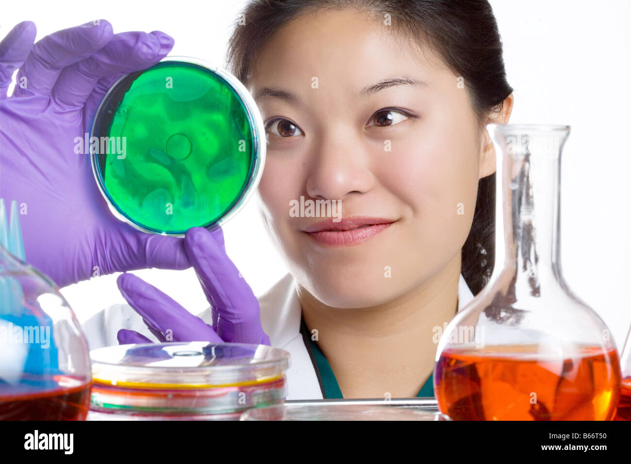 researcher examines petri dish plate. - Stock Image
