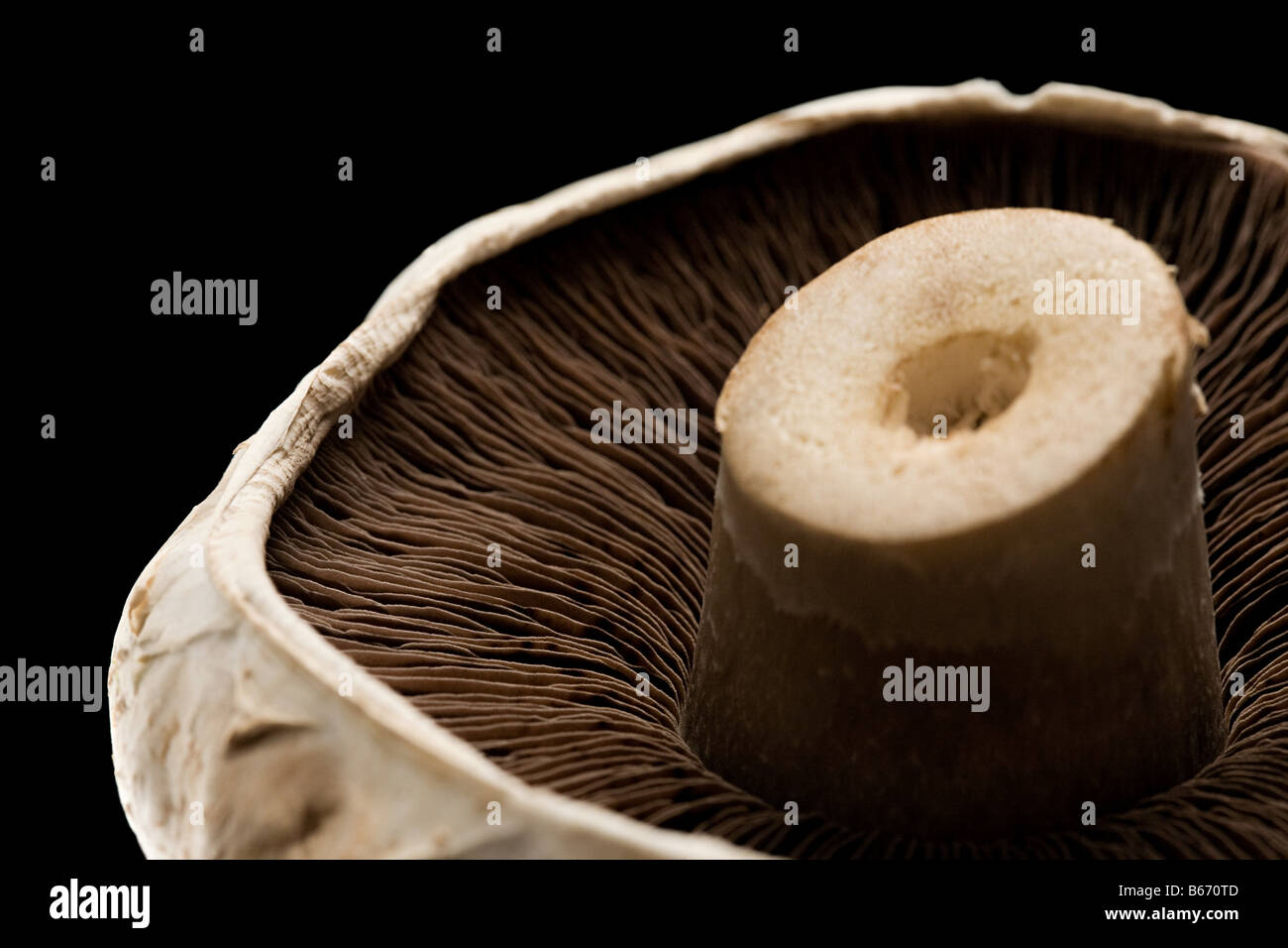 A mushroom - Stock Image