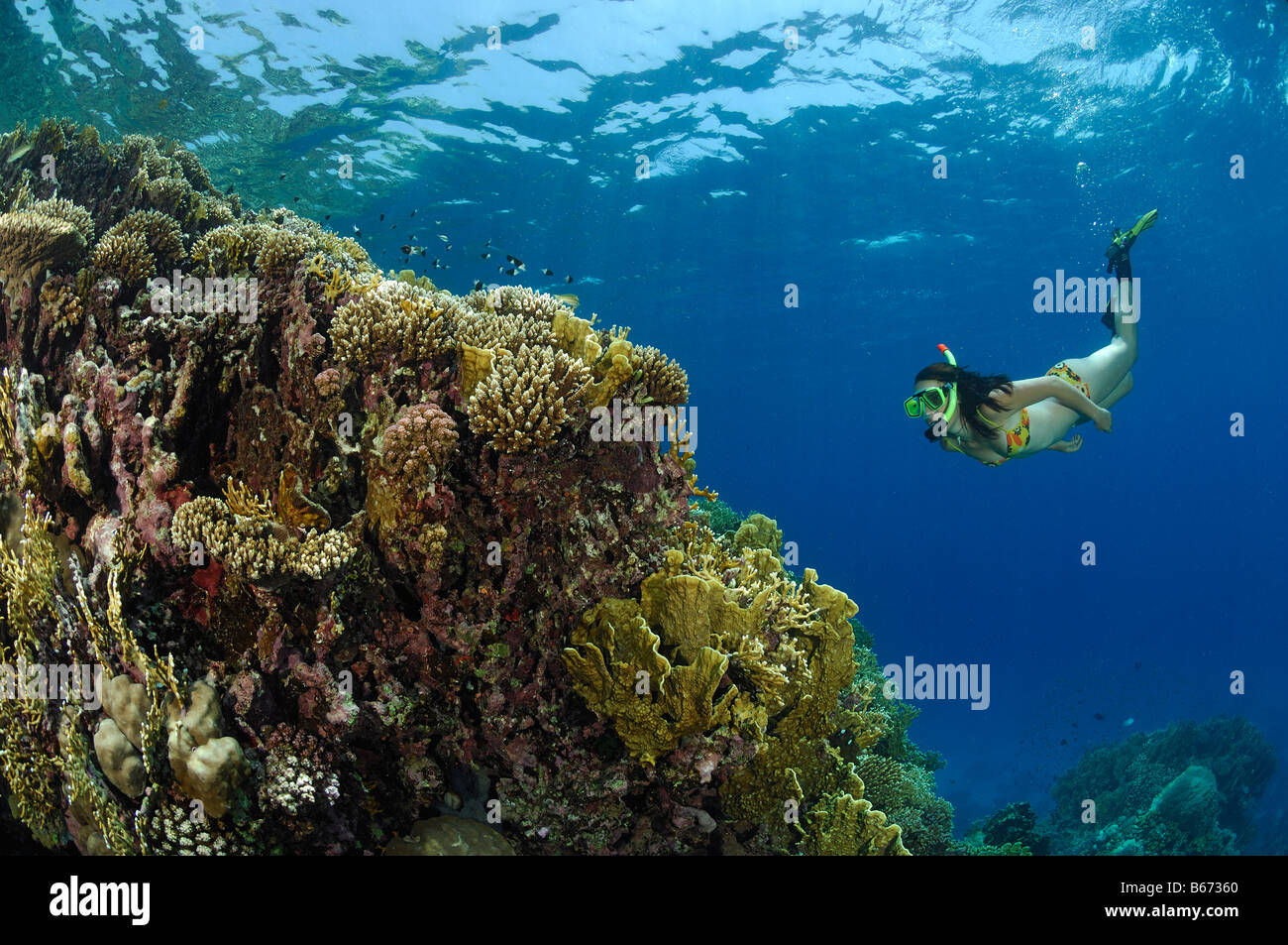 Skin Diver over Coral Reef Marsa Alam Red Sea Egypt Stock Photo