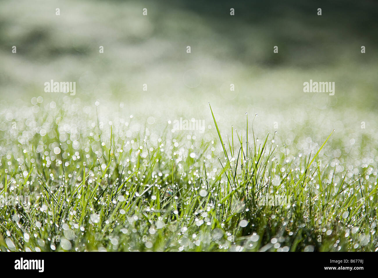 Close up of blades of grass - Stock Image