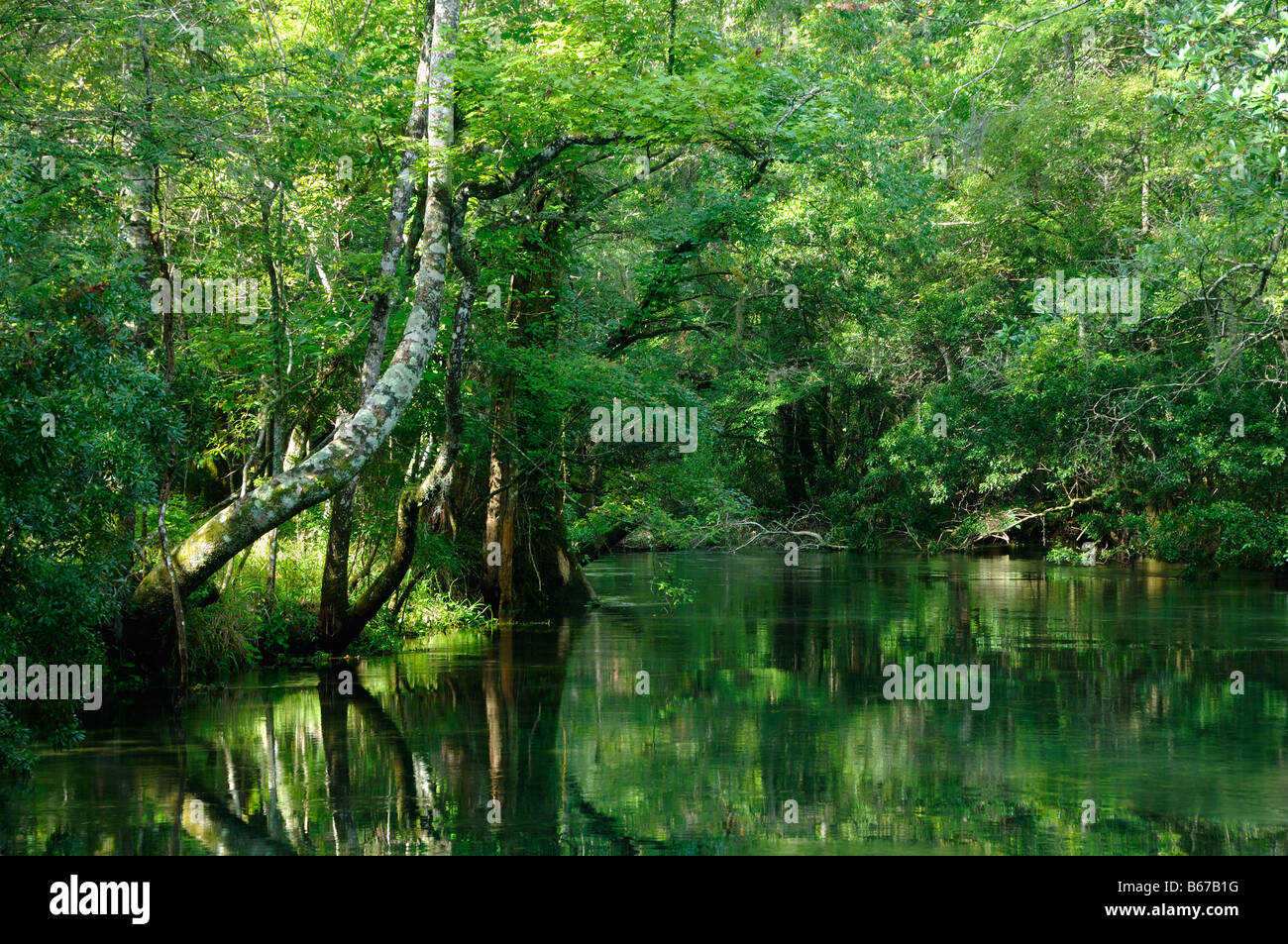 St Mark s river Florida - Stock Image