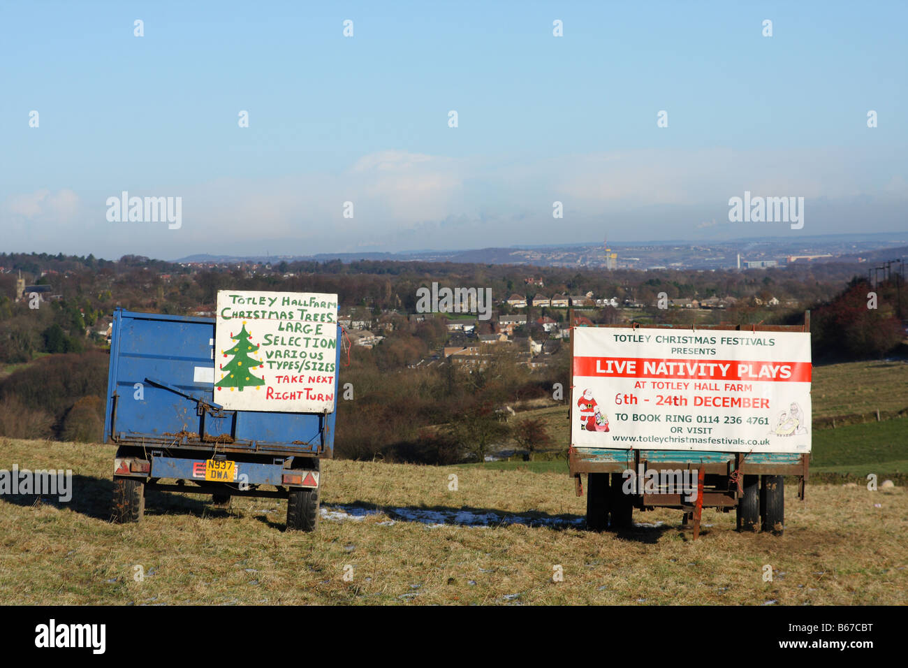 Trailers advertising Christmas trees for sale in a field in the U.K. - Stock Image