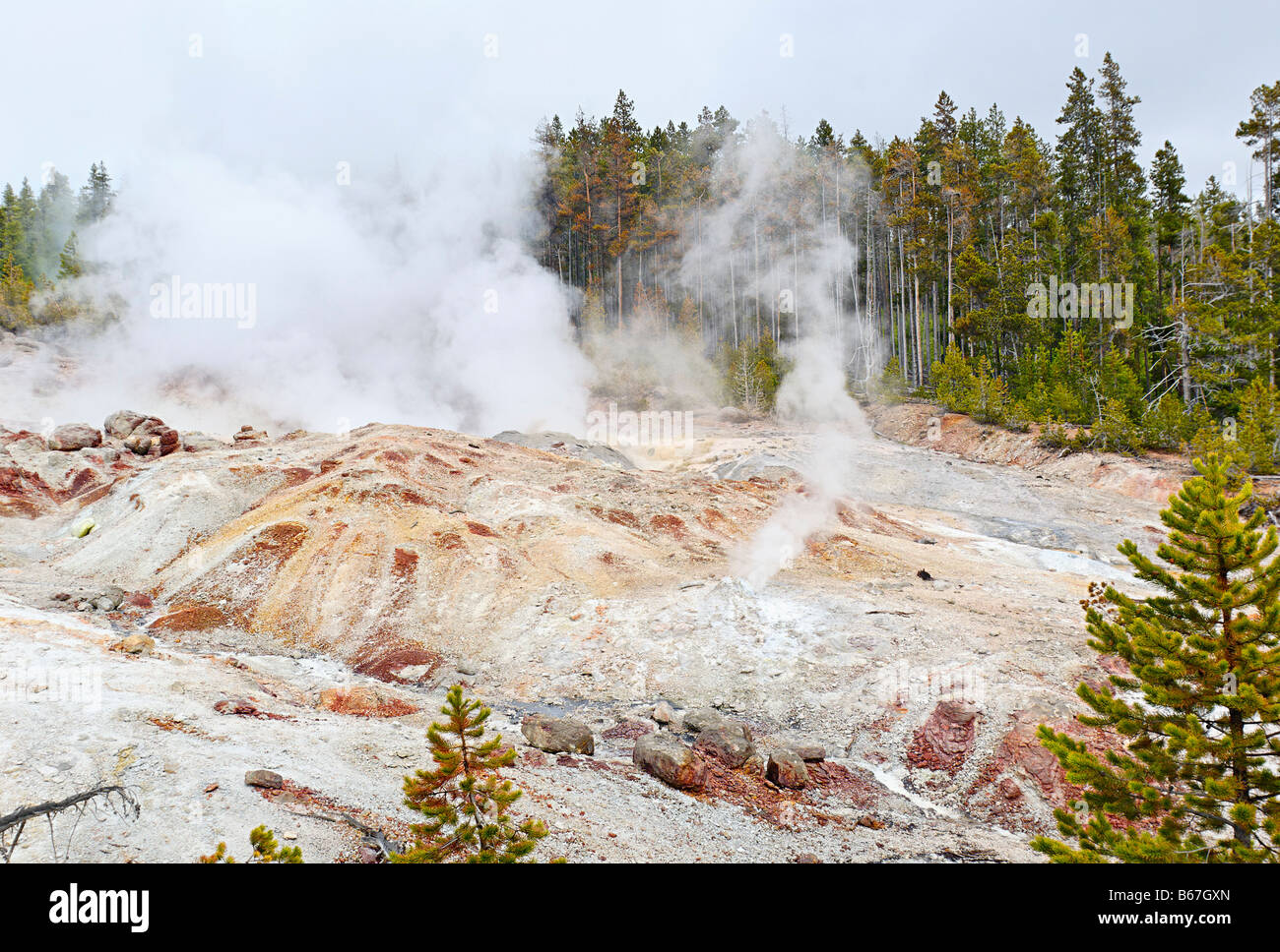 A hillside geyser erupting full of steam in Yellowstone National Park - Stock Image
