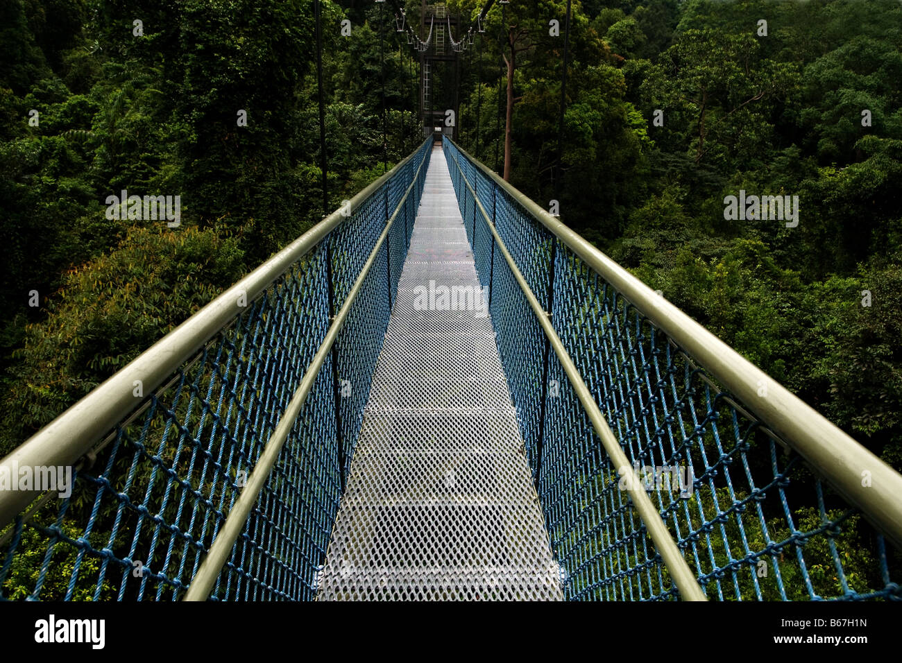 Tree top walk at MC Ritchie reservoir park in Singapore - Stock Image
