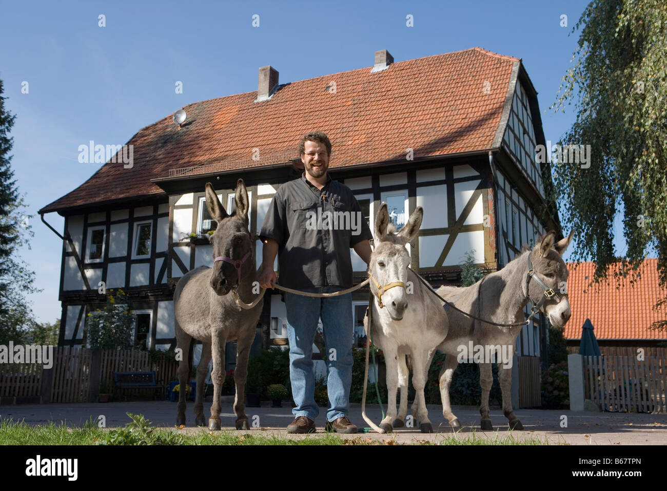 Man with three pet donkeys, Haunetal Neukirchen, Rhoen, Hesse, Germany - Stock Image