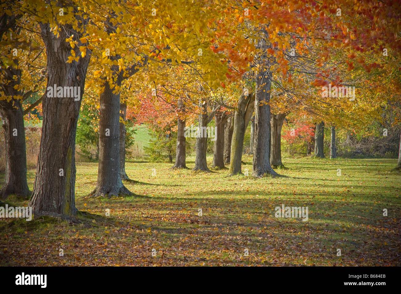Autumn Trees Fall Foliage, Pennsylvania USA - Stock Image