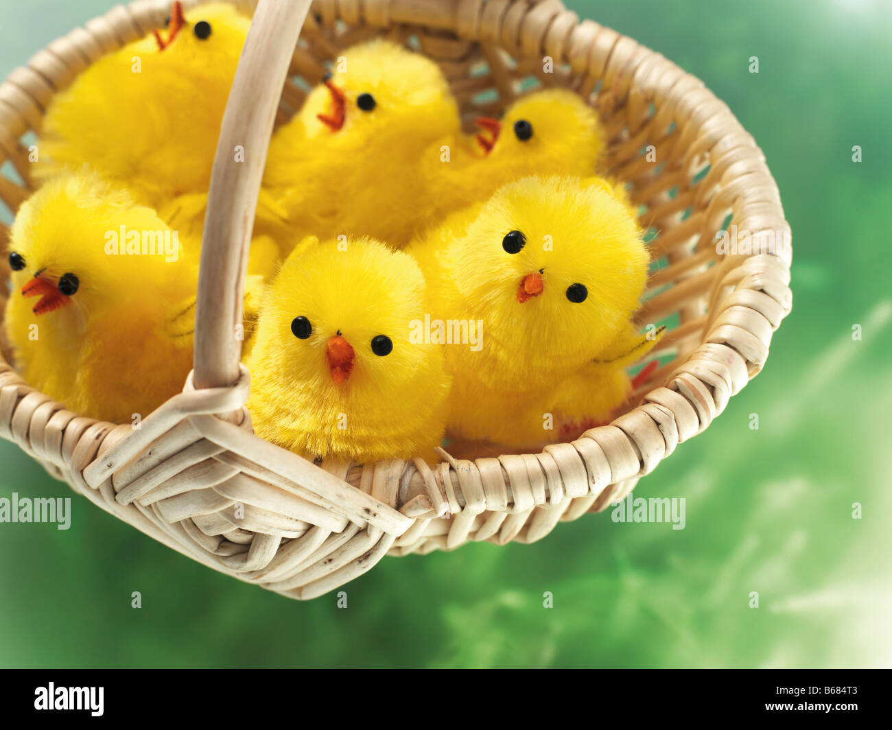 Easter Chicks in Basket Stock Photo