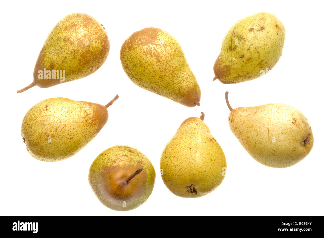 Seven different pears 33