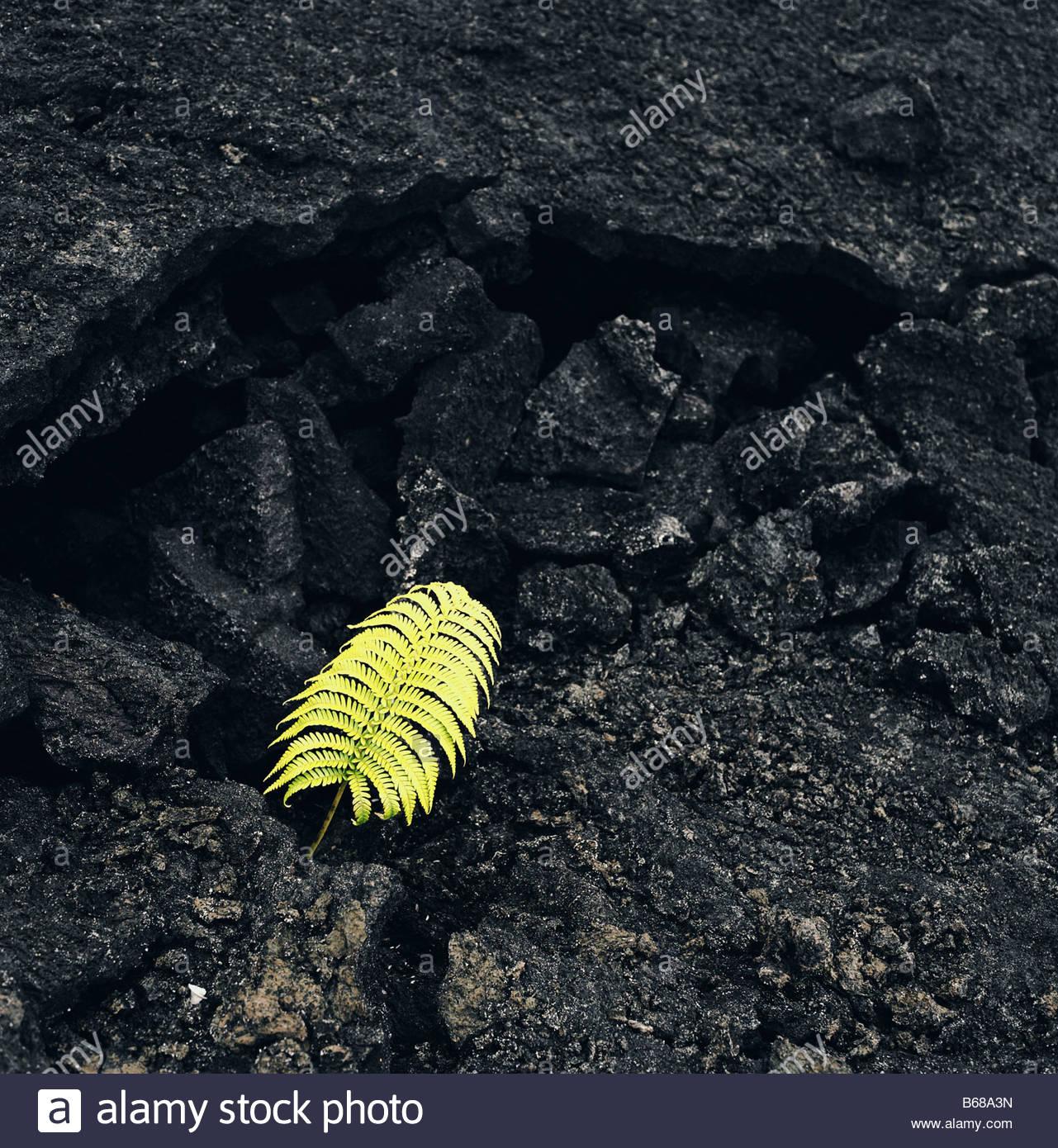 Single fern on rock formation - Stock Image
