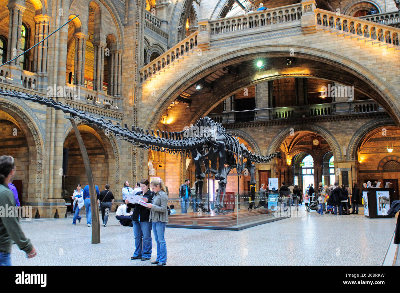 Natural History Museum main central hall with Diplodocus skeleton South Kensington SW7 London - Stock Image