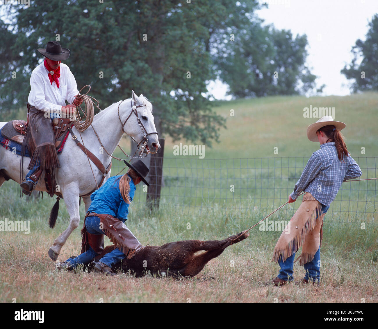 Young cowgirls branding a calf on a working ranch, Montana Stock Photo