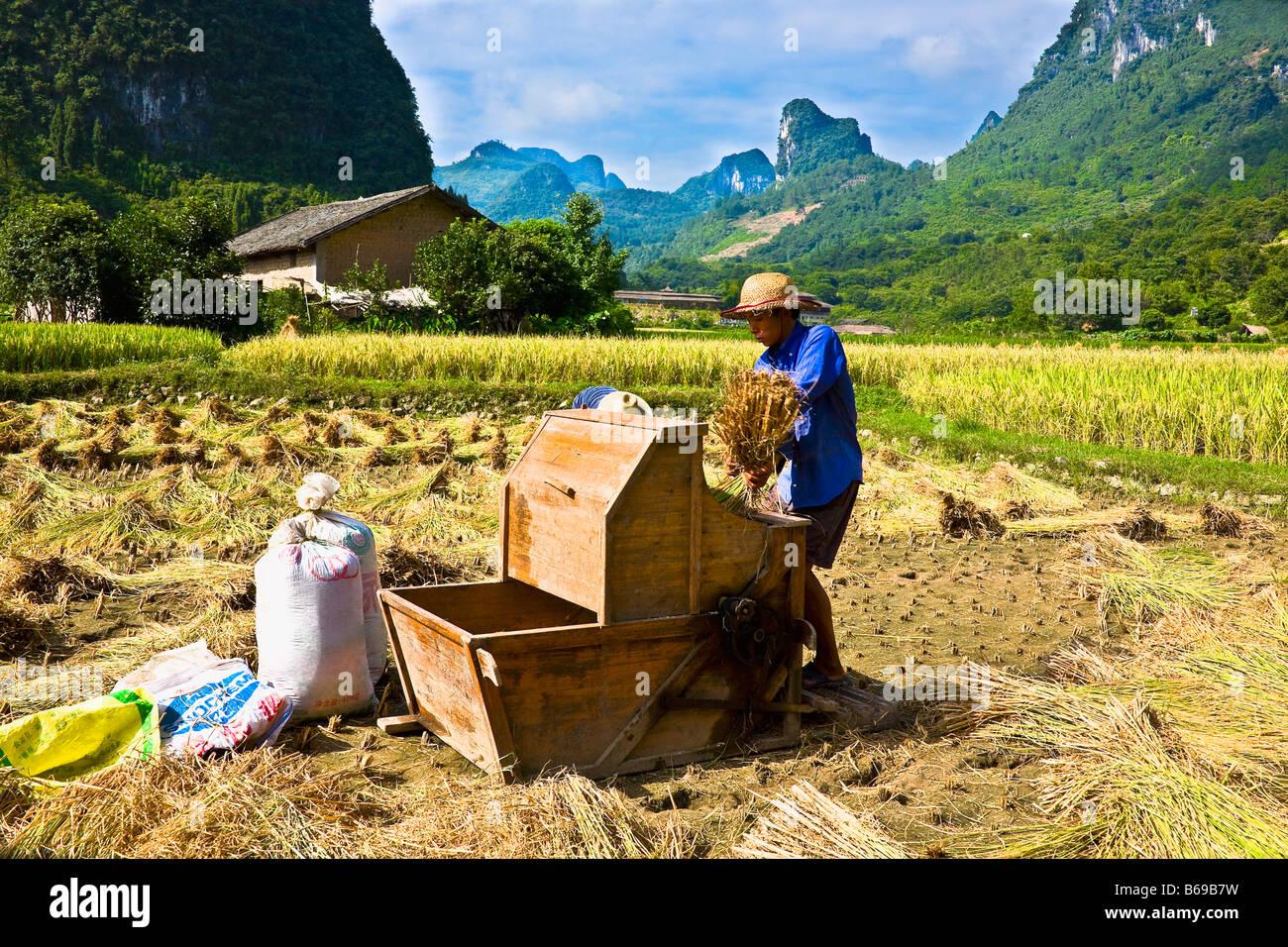 Farmer working in a rice paddy field, Xingping, Yangshuo, Guangxi Province, China Stock Photo